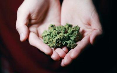 La diferencia entre Hash y Weed